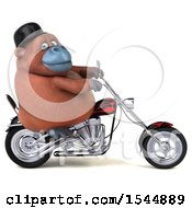 Clipart Of A 3d Orangutan Monkey Riding A Chopper Motorcycle On A White Background Royalty Free Illustration by Julos