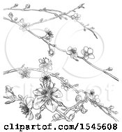 Clipart Of A Black And White Background Of Branches With Spring Blossoms Royalty Free Vector Illustration