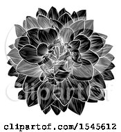 Black And White Dahlia Or Chrysanthemum Flower In Woodcut Style