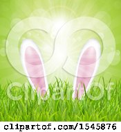 Poster, Art Print Of Easter Bunny Ears In Grass