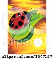 Ladybug On A Leaf Over A Sunset