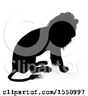 Silhouetted Male Lion Sitting With A Reflection Or Shadow