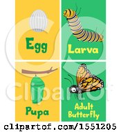 Clipart Of Flash Cards Of The Life Cycles Of A Monarch Butterfly Royalty Free Vector Illustration