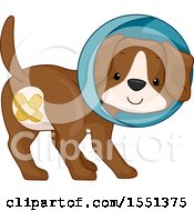 Poster, Art Print Of Neutered Puppy Dog With Bandages Over His Privates Wearing A Cone Of Shame