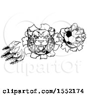 Clipart Of A Black And White Vicious Wildcat Mascot Shredding Through A Wall With A Soccer Ball Royalty Free Vector Illustration by AtStockIllustration