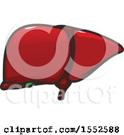 Clipart Of A Liver Human Anatomy Royalty Free Vector Illustration