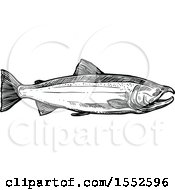 Sketched Black And White Coho Salmon