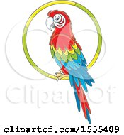 Clipart Of A Scarlet Macaw Parrot On A Ring Royalty Free Vector Illustration
