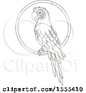 Lineart Macaw Parrot On A Ring