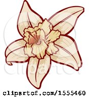 Clipart of a Vanilla Flower - Royalty Free Vector Illustration by Any Vector #COLLC1555460-0165