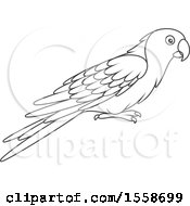 Lineart Parrot