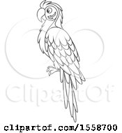 Clipart Of A Lineart Blue And Yellow Macaw Parrot Royalty Free Vector Illustration