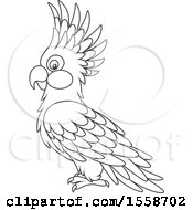 Clipart Of A Lineart Cockatoo Royalty Free Vector Illustration