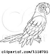 Lineart Scarlet Macaw Parrot