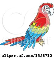 Clipart Of A Scarlet Macaw Parrot Royalty Free Vector Illustration