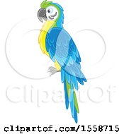 Clipart Of A Blue And Gold Macaw Parrot Royalty Free Vector Illustration