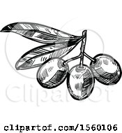 Black And White Sketched Olive Branch