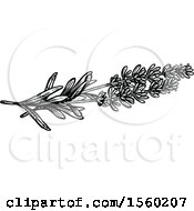 Clipart Of Black And White Sketched Lavender Royalty Free Vector Illustration