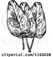 Black And White Sketched Sorrel