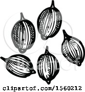 Clipart Of Black And White Sketched Coriander Royalty Free Vector Illustration