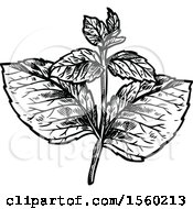 Clipart Of Black And White Sketched Melissa Royalty Free Vector Illustration