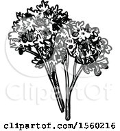 Clipart Of Black And White Sketched Parsley Royalty Free Vector Illustration