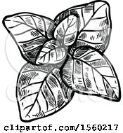 Clipart Of Black And White Sketched Marjoram Royalty Free Vector Illustration