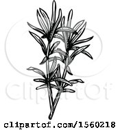 Clipart Of Black And White Sketched Savory Royalty Free Vector Illustration