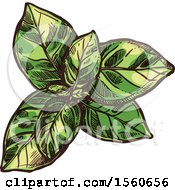 Clipart Of A Sketched Basil Plant Royalty Free Vector Illustration