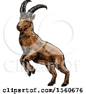 Clipart Of A Sketched Goat Royalty Free Vector Illustration