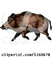 Clipart Of A Sketched Boar Walking Royalty Free Vector Illustration