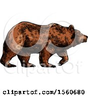 Clipart Of A Sketched Bear Walking Royalty Free Vector Illustration by Vector Tradition SM