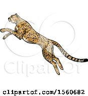 Clipart Of A Sketched Cheetah Pouncing Royalty Free Vector Illustration by Vector Tradition SM