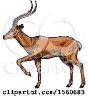 Clipart Of A Sketched Gazelle Royalty Free Vector Illustration by Vector Tradition SM