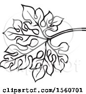 Black And White Bitter Gourd Leaf