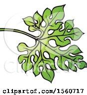 Bitter Gourd Leaf