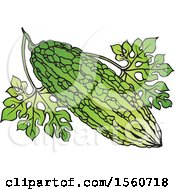 Clipart Of A Bitter Gourd Royalty Free Vector Illustration