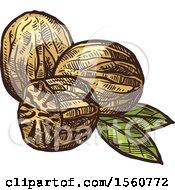 Sketched Nutmeg