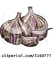 Clipart Of Sketched Garlic Royalty Free Vector Illustration by Vector Tradition SM