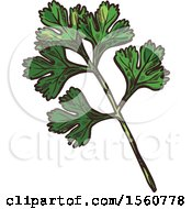 Sketched Cilantro