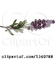Clipart Of Sketched Lavender Royalty Free Vector Illustration