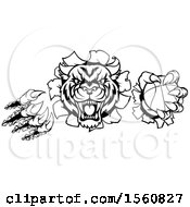 Clipart Of A Black And White Vicious Tiger Mascot Slashing Through A Wall With A Basketball Royalty Free Vector Illustration
