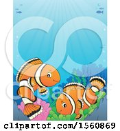 Clipart Of A Clownfish Pair Royalty Free Vector Illustration