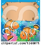 Clipart Of A Clownfish Pair With A Scroll Royalty Free Vector Illustration