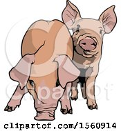 Clipart Of Pigs Royalty Free Vector Illustration