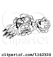 Clipart Of A Black And White Bulldog Monster Shredding Through A Wall With A Soccer Ball In One Hand Royalty Free Vector Illustration