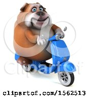 Clipart Of A 3d Bulldog Riding A Scooter On A White Background Royalty Free Illustration by Julos