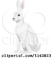 Clipart Of An Alert White Bunny Rabbit Royalty Free Vector Illustration