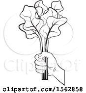 Black And White Hand Holding Radish Leaves