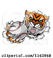 Clipart Of A Vicious Tiger Mascot Breaking Through A Wall With A Baseball Royalty Free Vector Illustration